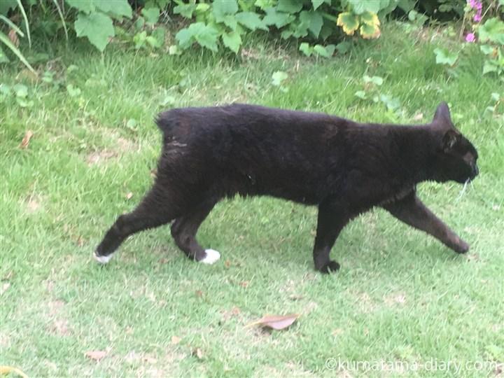 足先が白い黒猫さん