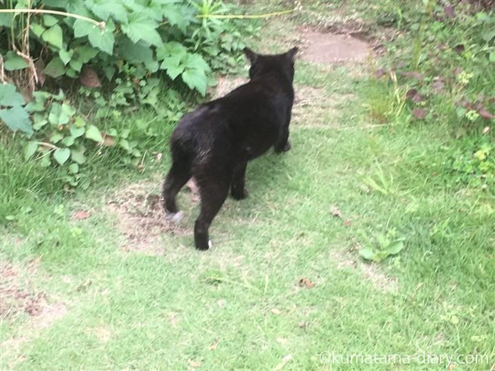 しっぽが短い黒猫さん