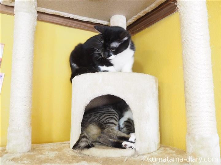 ボックスの中と上の猫さん