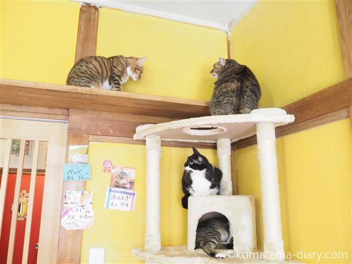 キャットタワーの猫さんたち