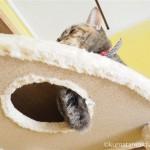 キャットタワーに集まっていた「ネコリパブリック東京御茶ノ水店」の猫さんたち