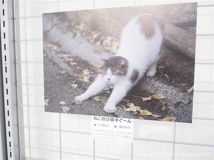 のび猫さん