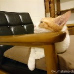 カリモク60のKチェアのアームにあごを乗せる猫