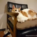 カリモク60「Kチェア1シーター スタンダードブラック」の上と下で寝る猫たち