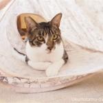 ひさしぶりに保護猫カフェ「funnyCat(ファニーキャット)」へ行きました