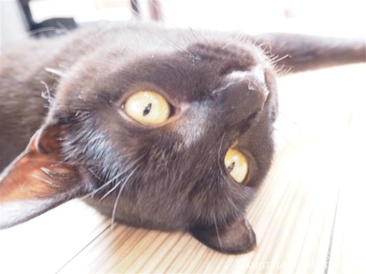 黒猫の歌丸師匠