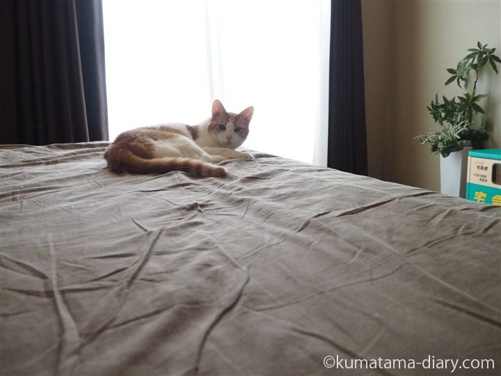 ベッドで寝るたまき