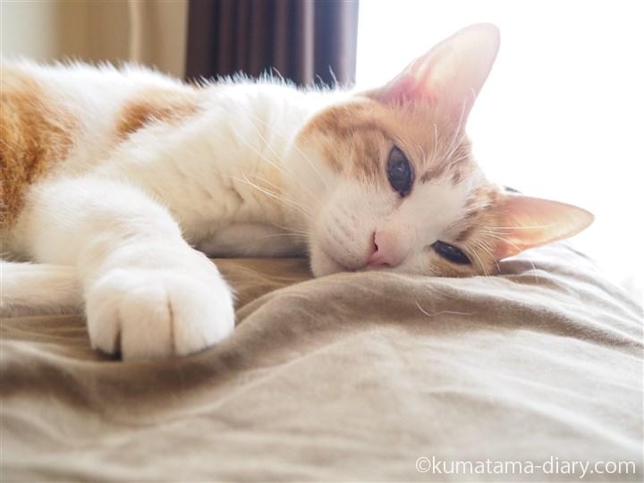 ベッドで寝るたまきの顔