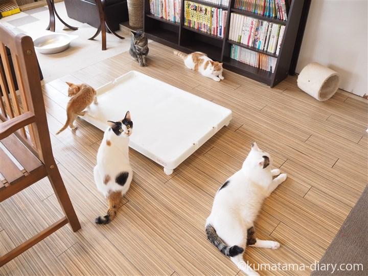 エサを待つ猫さんたち