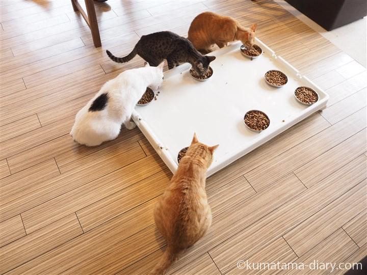エサを食べる猫さんたち