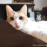 猫の誕生日プレゼントでソファー型の爪とぎ「ガリガリソファスクラッチャー」を買ってもらいました
