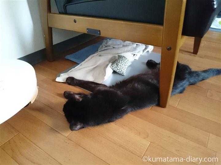 床で寝るくま