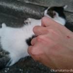 今年の「世界猫の日」は、近所の猫さんにひっかかれました