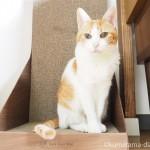 ついに!「ガリガリウォール スクラッチャー インテリア ダルブラウン」を使い始めた猫