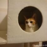 猫と一緒に引っ越しました