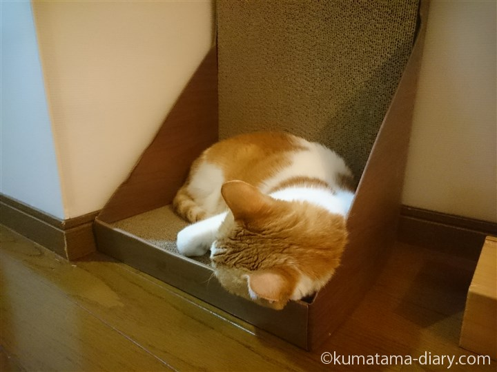 ガリガリウォールで眠るたまき