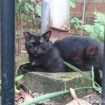 【文京区】猫好きにはたまらない「白山神社」の黒猫さんたち