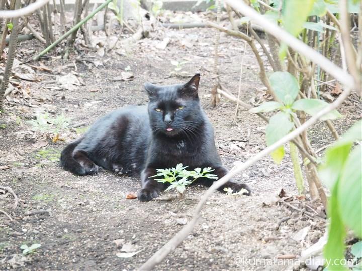 舌見え黒猫さん