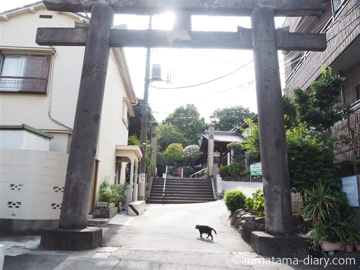 白山神社の猫さん