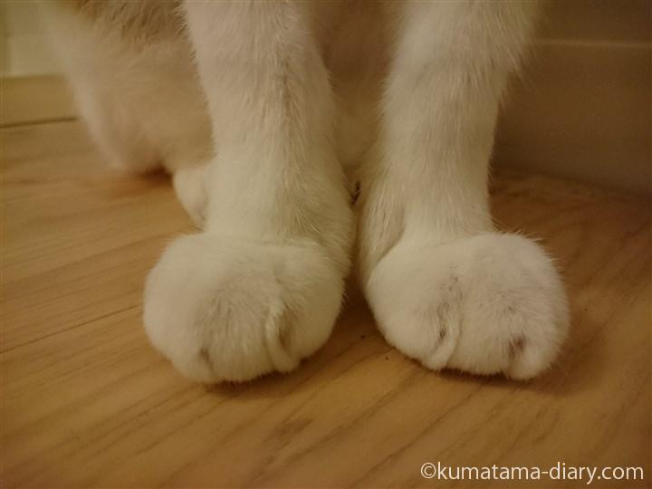 たまきの足