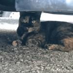 【文京区】お寺の駐車場にいた猫さんたち