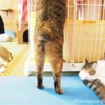 2本足で立ってドライフードを漁っていた「ネコリパブリック東京お茶の水店」の猫さん
