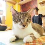 ネコリパブリック東京お茶の水店の「ネコヨガ(NECOYOGA)」でリラックスしていた猫さんたち