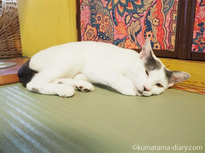 床で寝る猫さん