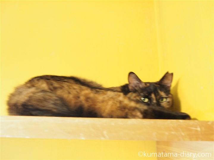 上で寝るサビ猫さん