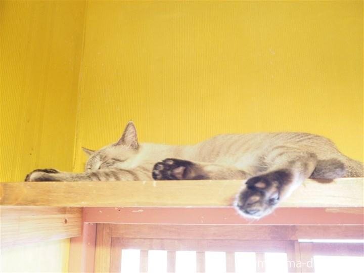 上で寝る猫さん