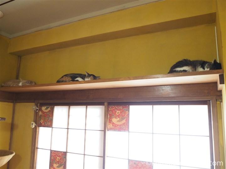 上で寝る猫さんたち