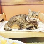 IKEAの「DUKTIG 人形用ベッド」で寝ていたネコリパブリック東京お茶の水店の猫さん