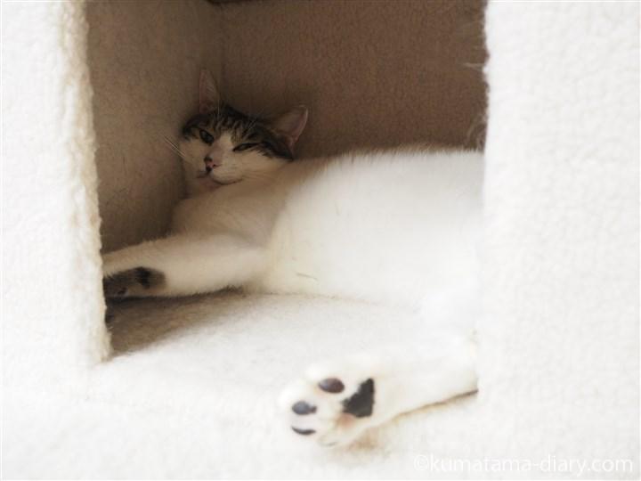 ボックスの中の猫さん