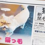 『月刊猫とも新聞』2017年9月号の特集は「猫っ毛」です