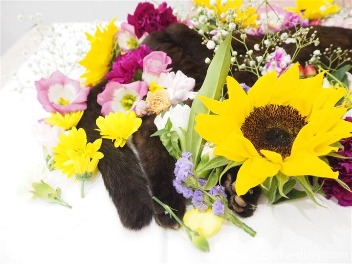 くまとお花