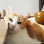 カリモク60のローテーブルに顔を乗せる猫