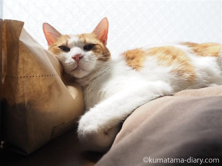 猫草を枕にするたまき