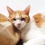 無印良品の「猫草栽培セット」を枕にして眠る猫