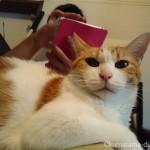 彼の膝に乗る猫
