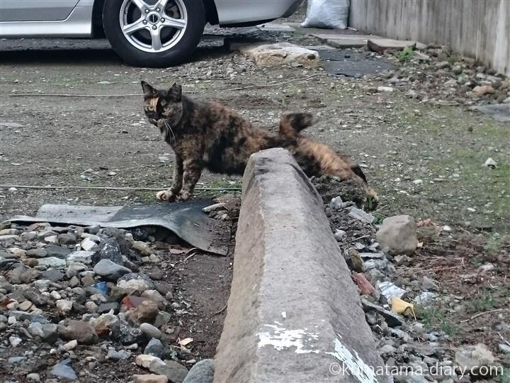 伸びるサビ猫さん