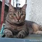 目がまんまるで可愛らしい近所のキジトラ猫さん