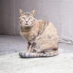 日本橋のキジトラ猫さんたち