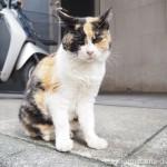 日本橋の三毛猫さん