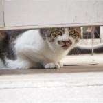 【日本橋】等間隔で並んでいたキジトラ猫さんたち