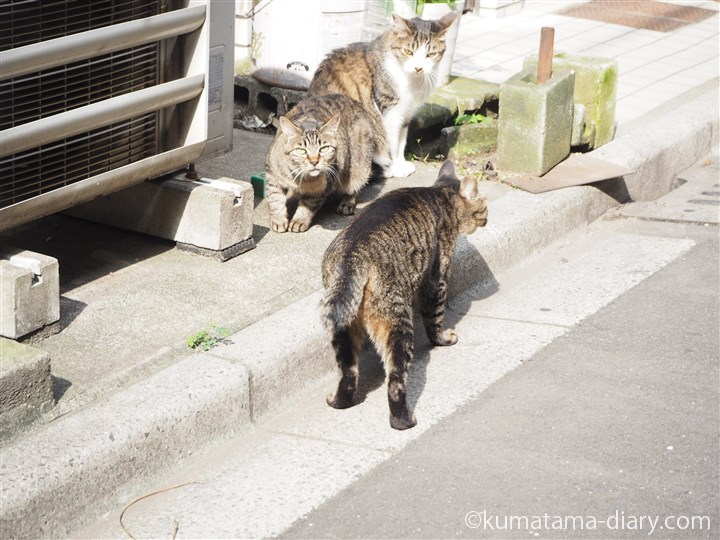 キジトラ猫さん挨拶