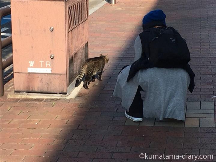 去年の私とキジトラ猫さん