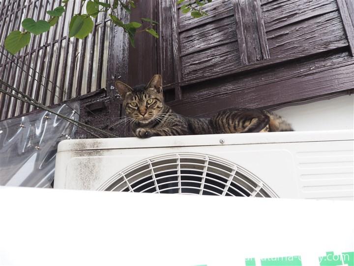 室外機の上の猫さん