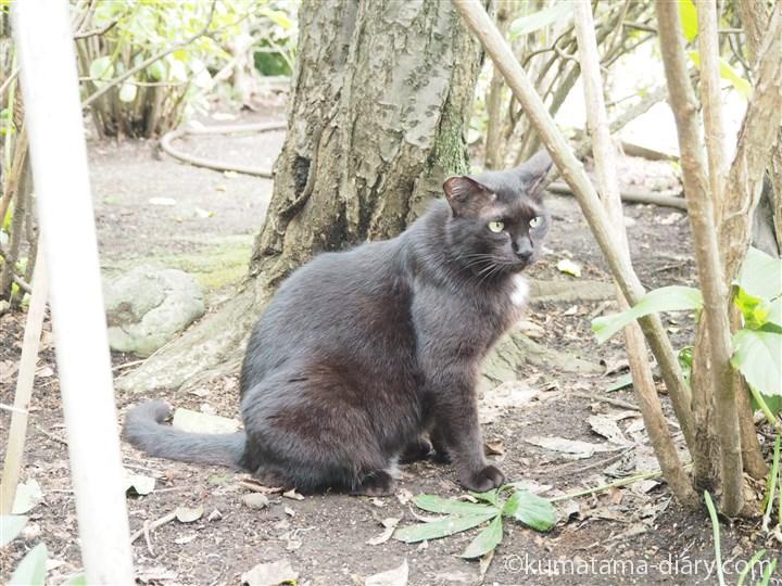 白山神社の黒猫さん