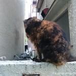 逃げるサビ猫さんと人懐こいキジトラ白猫さん