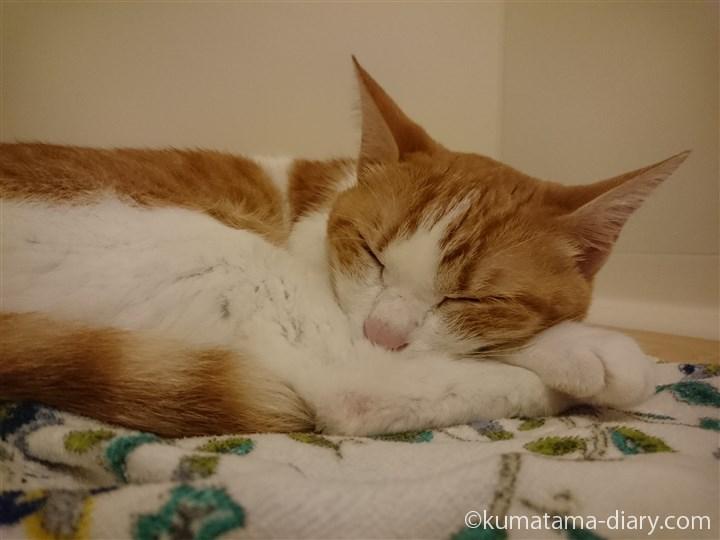 風呂で寝るたまき